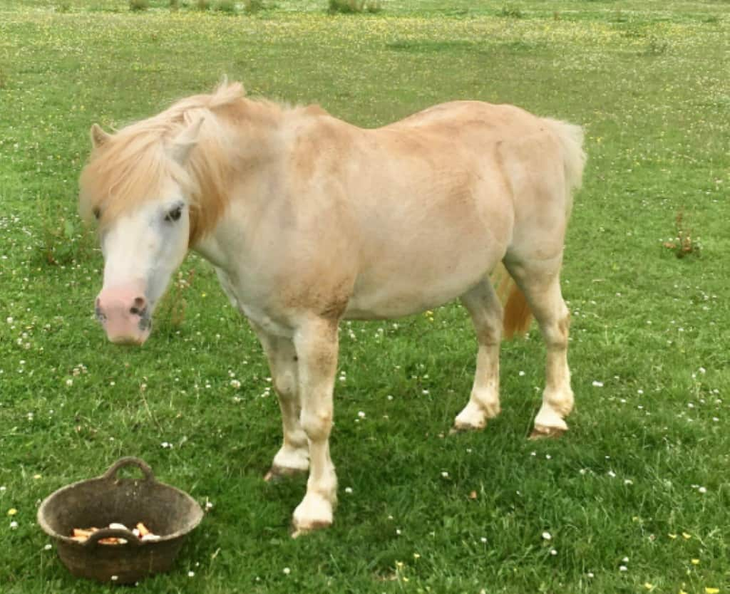 Dry Hooves In Horses