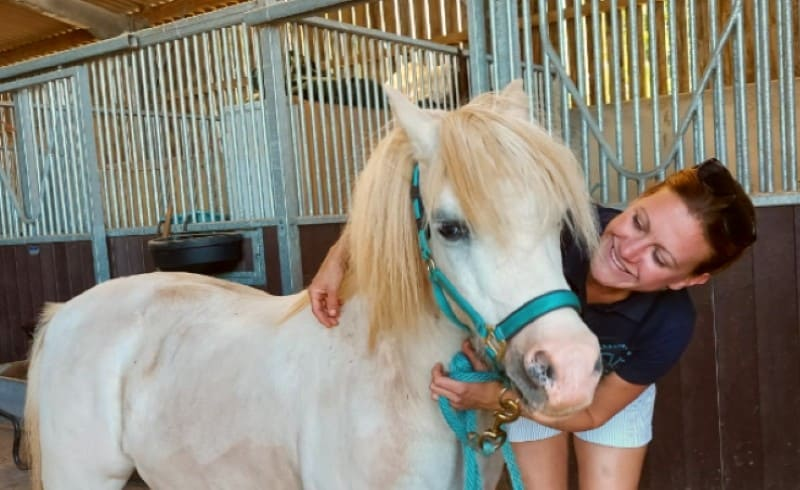 image of a white horse getting some loving attention
