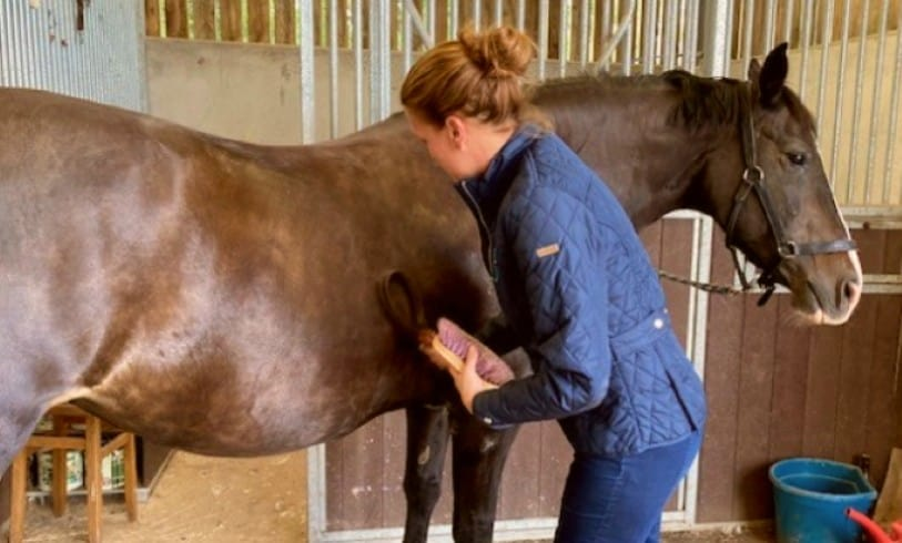 image of a retired horse receiving care in stable